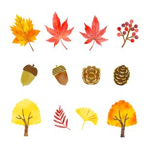 手描き水彩風 秋の植物イラストセット のイラスト素材 [FYI03402950]
