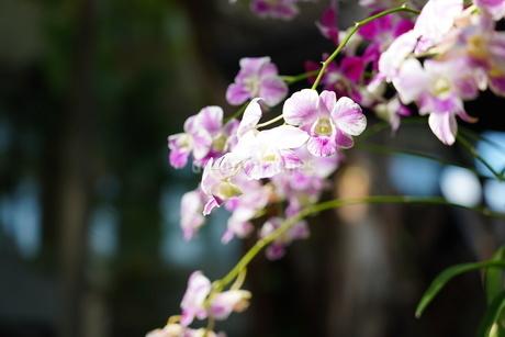 南国の花の写真素材 [FYI03403034]