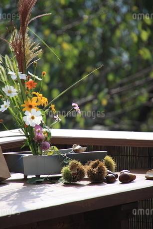 秋の生花の写真素材 [FYI03403241]