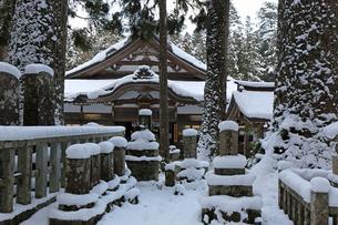 冬の高野山参道の写真素材 [FYI03403243]