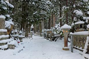 冬の高野山参道の写真素材 [FYI03403245]