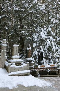 冬の高野山参道の写真素材 [FYI03403248]