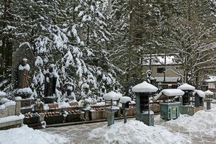 冬の高野山参道の写真素材 [FYI03403250]