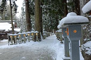 冬の高野山奥之院参道の写真素材 [FYI03403251]