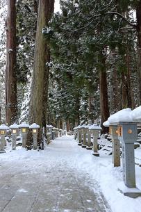 冬の高野山奥之院参道の写真素材 [FYI03403252]