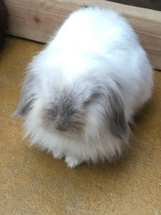ウサギ①の写真素材 [FYI03403410]