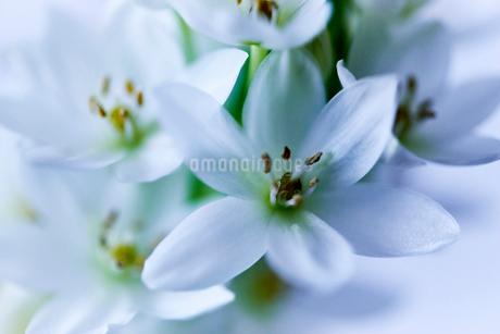 白い花の写真素材 [FYI03403492]