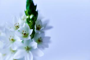 白い花の写真素材 [FYI03403495]