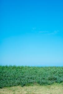 風景 空 植物の写真素材 [FYI03403606]
