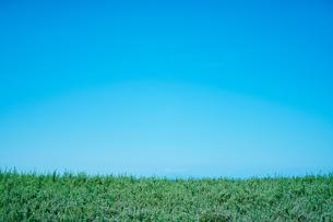 風景 空 植物の写真素材 [FYI03403608]