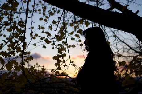 銀杏と夕焼けとシルエットの写真素材 [FYI03403629]