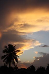 アマゾンの夕焼けの写真素材 [FYI03403768]