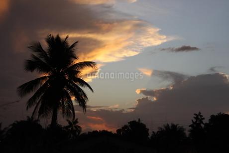 アマゾンの夕焼けの写真素材 [FYI03403921]