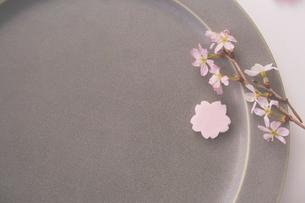 グレーの皿の上に置かれた砂糖菓子のサクラとサクラの花の写真素材 [FYI03404066]