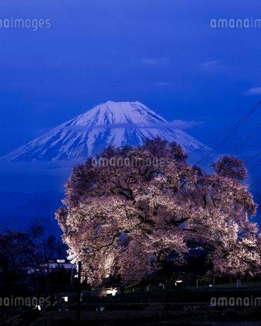 わに塚の桜と富士山 日本 山梨県 韮崎市の写真素材 [FYI03404084]