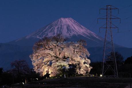 わに塚の桜と富士山の写真素材 [FYI03404090]