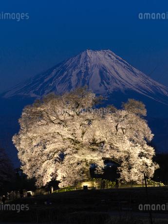 わに塚の桜と富士山の写真素材 [FYI03404091]