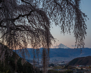 桜と富士山 日本 山梨県 山梨市の写真素材 [FYI03404093]