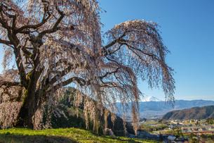 桜と富士山 日本 山梨県 山梨市の写真素材 [FYI03404094]