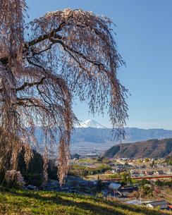 桜と富士山 日本 山梨県 山梨市の写真素材 [FYI03404095]
