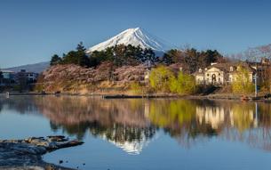 桜と富士山 河口湖 の写真素材 [FYI03404096]