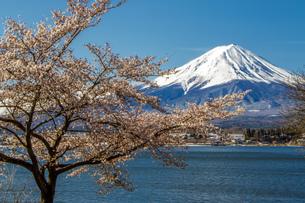河口湖 日本 山梨県 富士河口湖町の写真素材 [FYI03404108]