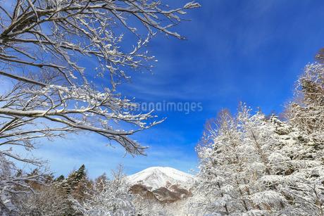 冬の富士山 日本 山梨県 富士吉田市の写真素材 [FYI03404112]