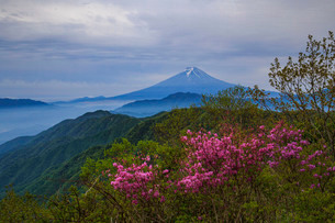 白谷ノ丸から望む富士山 日本 山梨県 大月市の写真素材 [FYI03404148]