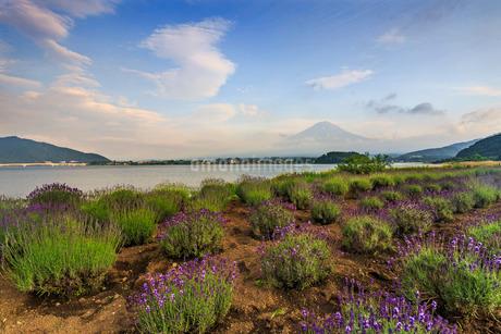 大石公園と富士山 日本 山梨県 富士河口湖町の写真素材 [FYI03404158]