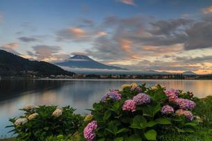 あじさいと富士山 河口湖 の写真素材 [FYI03404159]