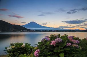 あじさいと富士山 河口湖 の写真素材 [FYI03404161]