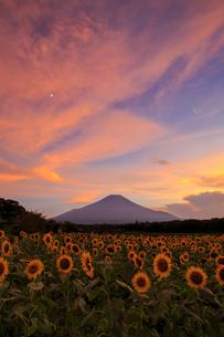 花の都公園 日本 山梨県 山中湖村の写真素材 [FYI03404173]