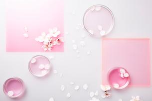 ピンクのアクリル板とシャーレに入ったピンクの液体とサクラの花びらの写真素材 [FYI03404195]