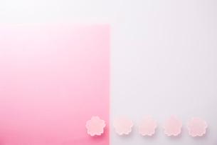 ピンクのアクリル板とサクラの菓子の写真素材 [FYI03404199]