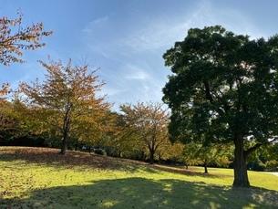 紅葉と芝生の写真素材 [FYI03404392]