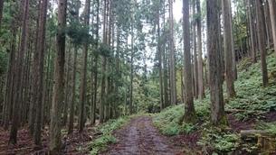 林道の写真素材 [FYI03404490]