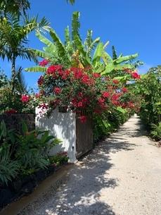 ハワイの写真素材 [FYI03404602]
