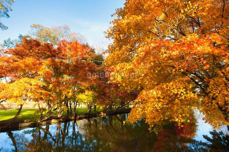 清水公園の紅葉の写真素材 [FYI03404714]