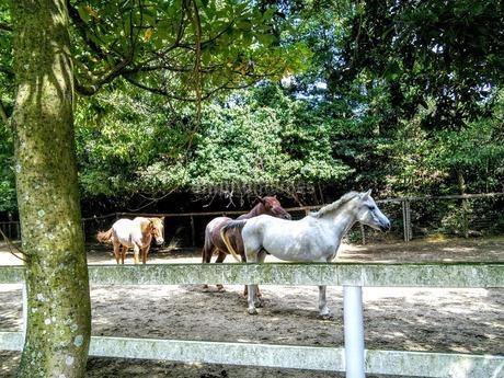 馬肥ゆる秋の写真素材 [FYI03404910]