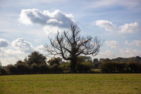 フィールドに生える、一本のミステリアスな巨大な木の写真素材 [FYI03405298]