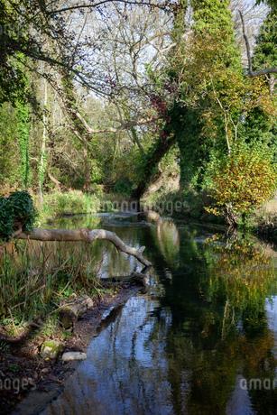 イギリスの森の中にある小川の写真素材 [FYI03405308]