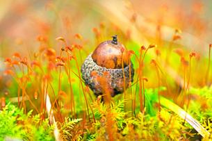 小さな秋の写真素材 [FYI03405559]