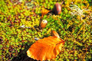 小さな秋の写真素材 [FYI03405584]