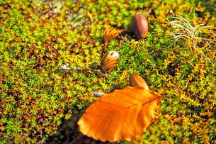 小さな秋の写真素材 [FYI03405585]