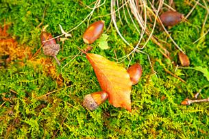 小さな秋の写真素材 [FYI03405586]