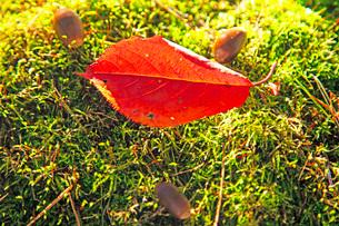 小さな秋の写真素材 [FYI03405594]