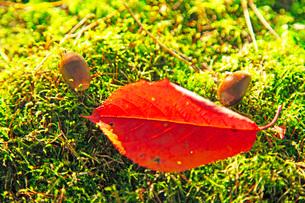 小さな秋の写真素材 [FYI03405595]