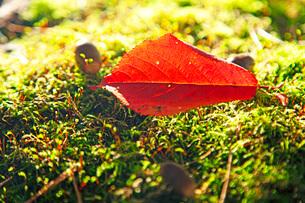 小さな秋の写真素材 [FYI03405596]
