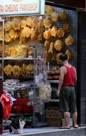 香港の「海味街」と呼ばれるデボーロードで売られる魚の浮袋「魚胆」「花膠」高級中華食材だの写真素材 [FYI03405832]