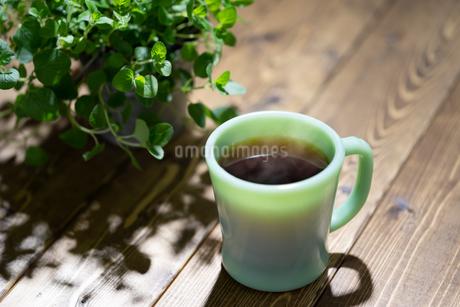 コーヒーと植物の写真素材 [FYI03405880]